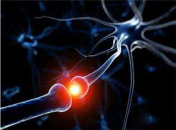 植物神经紊乱的主要症状是什么